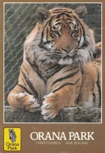 Giant Tiger At Orana Park New Zealand Zoo Postcard