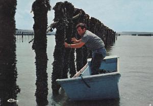 POSTAL 18715: Recolte des moBrieucules Baie S