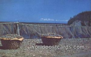 Gaspe Peninsula Canada, du Canada Drying Cod, Gaspe Coast  Drying Cod, Gaspe ...