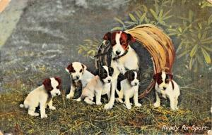 READY FOR SPORT-MOTHER &FIVE FOX TERRIER PUPPIES~1909 TUCK POSTCARD