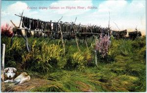 PILGRIM RIVER, AK  Alaska   ESKIMO DRYIING SALMON  Husky Dog  c1910s   Postcard