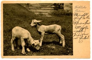 Greeting - Happy Easter!   (Lambs)