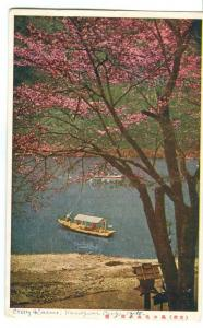 Japan, Cherry Blossom, Kameyama Park, Kyoto, used Postcard