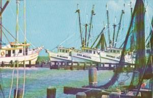 Texas Corpus Christi Shrimp Fleet