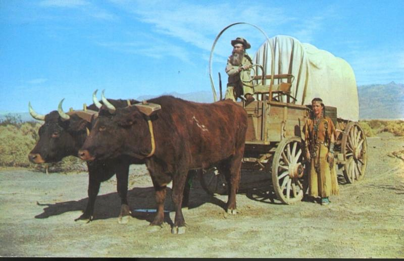 Ox Team Covered Wagon Oxen Buck & Princess White Feather Vintage Postcard E1