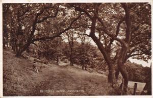 Wales Prestatyn, Bluebell Wood, forest pathway
