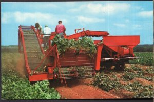 Prince Edward Island COVEHEAD Harvesting Potatoes Picker - Chrome