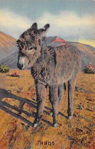 Burro Post Card Rags, I Want My Mama Baby Burro Unused
