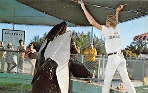 Famous Hugo, the killer whale Miami, Florida