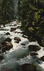 Vintage Postcard 1910's A Trout Stream Idaho ID Pub By Wesley Andrews
