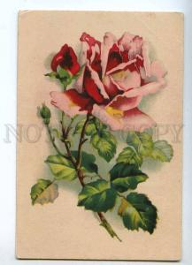 215738 Huge Pink ROSES Greeting by C. KLEIN old PC