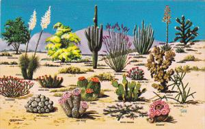 Cacti and Desert Flora of The Great Southwest