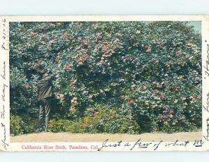 Pre-1907 POSTCARD SCENE Pasadena - Los Angeles California CA hp9009