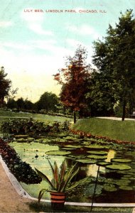 Illinois Chicago Lincoln Park Lily Bed 1908