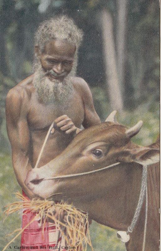 A Carter & his Bull , Ceylon , 00-10s