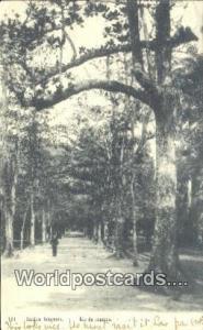 Brazil, Bresil, Brasil Rio De Janeiro Jardim Botanico