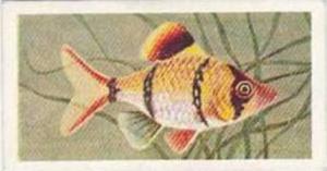 Mitchum Foods Vintage Trade Card Aquarium Fish 1957 2nd Series No 44 Bleeker ...