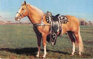 Golden Palomino, Horse, Chrome