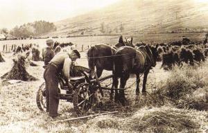 Nostalgia Postcard At work in the Highlands, Scotland, 1912, Harvest #CN7