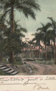 PANAMA, 1901-07; Royal Palms, Ancon, Canal Zone