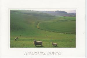 Hampshire Downs - Unused