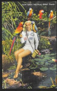 Pretty Lady in Parrot Jungle Miami Florida Unused c1930s