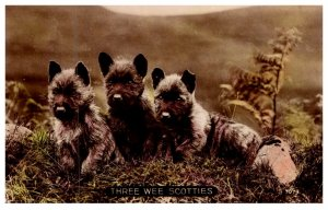 Dog ,  Three Wee Scotties
