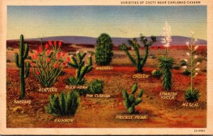 Cactus Many Varieties Of Cacti Near Carlsbad Caverns New Mexico 1939 Curteich