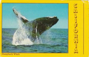 Humpback Whale In California 1997