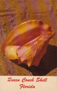 Florida Queen Conch Shell
