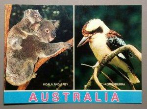 Australia - Koala and Baby & Kookaburra Postcard