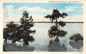 Lake Charles Louisiana Waterfront Water Tree Antique Postcard K38582