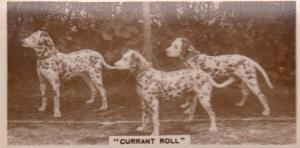 Currant Roll Dalmation Dog Spotty Dogs Old Real Photo Cigarette Card