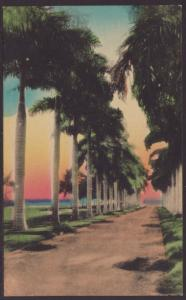 Royal Palms,Hand Tinted Postcard