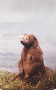 Peninsula Brown Bear on Unimak Island, Alaska - Denver Museum of Natural History