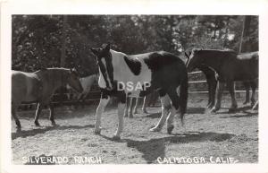 C41/ Calistoga California Ca Postcard Real Photo RPPC 1954 Silverado Ranch Horse