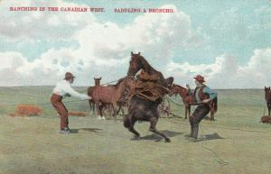 Ranching in the Canadian West , Saddling a Broncho , 00-10s