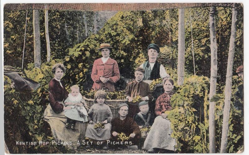 Social History; Kentish Hop Gardens, A Set Of Hop Pickers PPC 1912 Chartham PMK