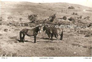 Dartmoor Ponies A Tuck Postcard Serie  DTMR 42