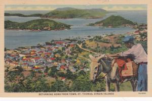 ST THOMAS , Virgin Islands , 30-40s ; Boy & Donkey