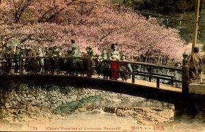 Japan - Nagasaki. Cherry Blossoms at Karurusu