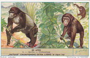 Liebig S1604 Monkeys II No 6 Gorilla - Chimpanzee
