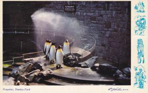 Penguins , Stanley Park , VANCOUVER , B.C., Canada , 50-60s