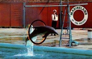 California Marineland Of The Pacific Zippy Star Performing Porpoise 1959