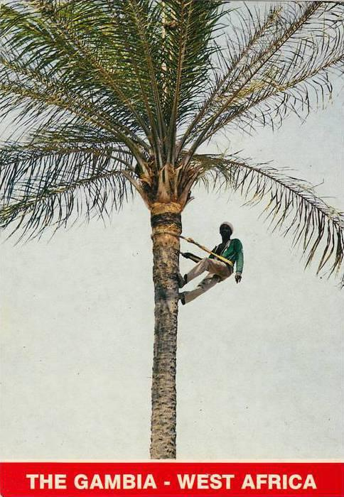 Climbing the palm tree , Gambia , 50-70s