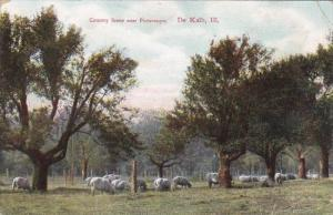 Illinois De Kalb Country Scene With Grazing Sheep 1910