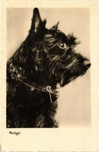 CPA Scottish terrier DOGS (727788)