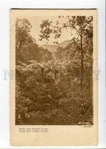 271035 INDONESIA HOLLAND INDIA Djadjar Forest near Nongko OLD