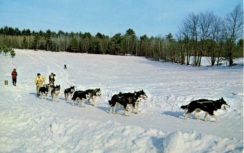 NH - Championship Sled Dog Racing
