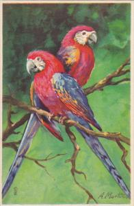 A Martin Beautiful Parrots